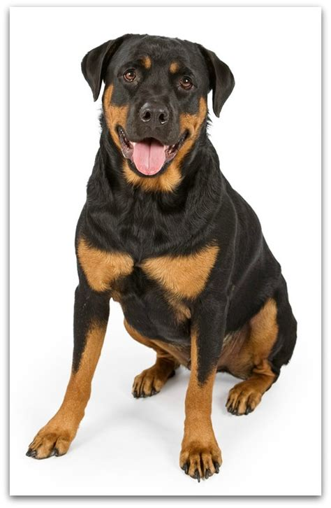 r for dogs list of breeds from a z