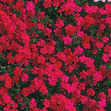 flower bulbs, shrubs, ornamental grasses, groundcover