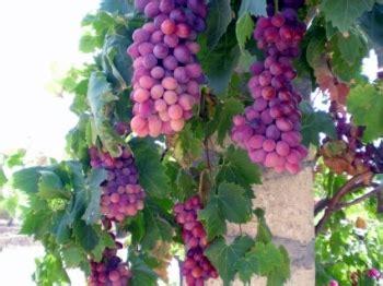 Dijual Glasses 720p Hd High Resolution Hitam Murah 20170817 how much wine is for you veena patwardhan