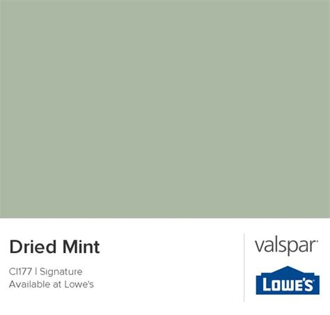 dried mint from valspar painting valspar mint color and chips