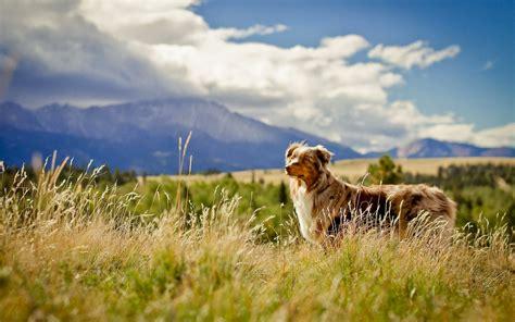 grass puppy hd animals wallpapers