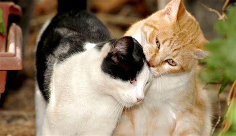 katze pinkelt in wohnung wenn die katze in der wohnung markiert