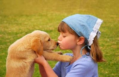 how to care for a golden retriever puppy how to take care of a golden retriever golden retriever experts