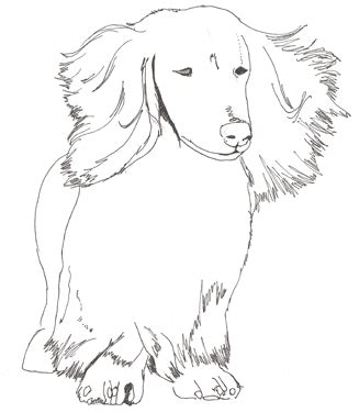 miniature dachshund coloring pages difficult coloring pages