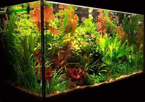 led aquarium lighting planted tank lighting for a planted aquarium pethelpful