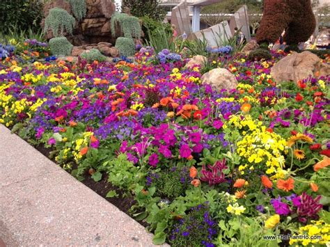 epcot s flower and garden festival peggy s picks