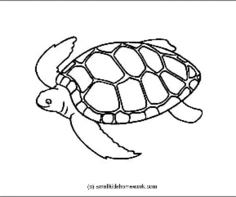 turtles coloring turtle outline picture for coloring