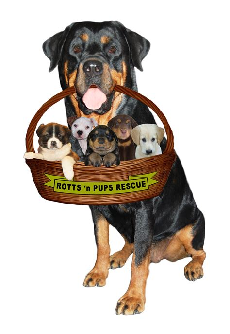 wisconsin rottweiler rescue pet rescue rottweiler dogs in our photo