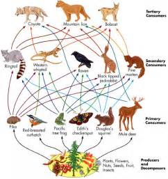 Grassland biome food chain jpg