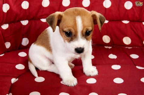 potty puppy potty puppys puppies puppy
