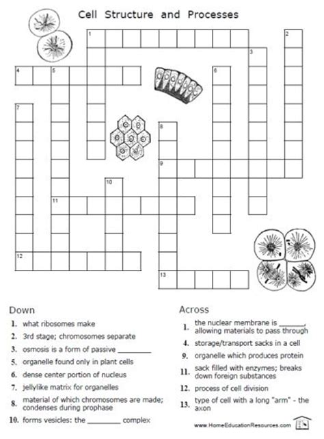 printable crossword puzzle for primary school free cells worksheets