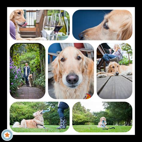 pet and photography for everybody secrets from a pro books pet photography tips for capturing a s personality
