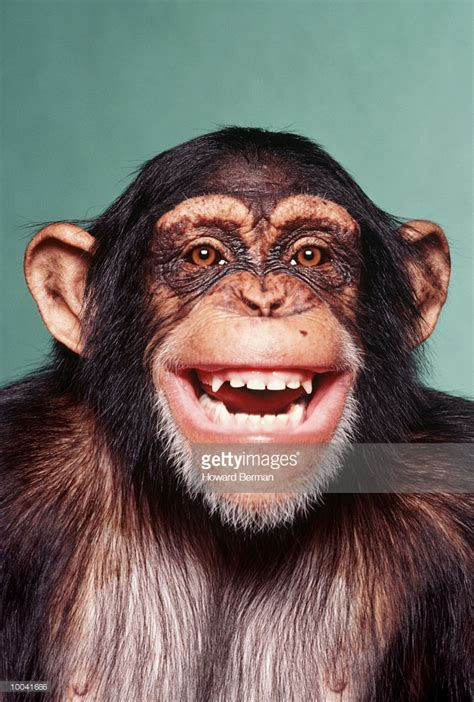 Laughing Monkey Pictures laughing monkey stock photo getty images