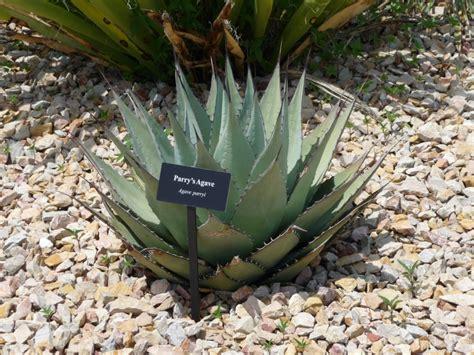 el paso botanical gardens el paso desert botanical gardens el paso cityseeker