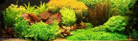 style aquascape dutch aquarium aquascape a style from the 1930s aquascaping love