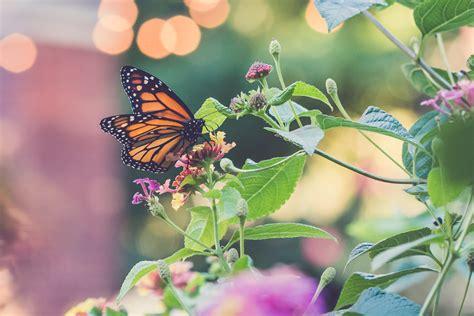 in my own backyard in my own backyard minding my nest