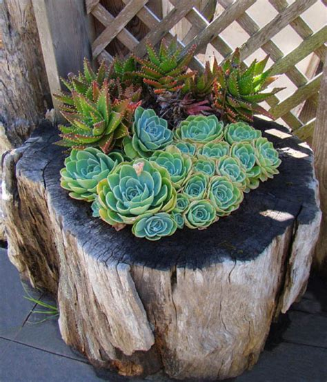 18 old tree stumps turned into beautiful flower planters