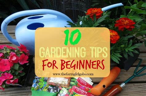 Gardening Ideas For Beginners Hometalk Plants Flowers Backyard V S Clipboard On Hometalk