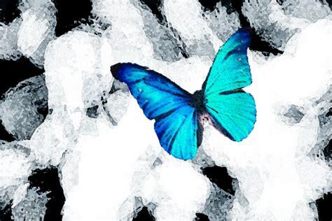 it was snowing butterflies butterfly in the snow by jessy08 on