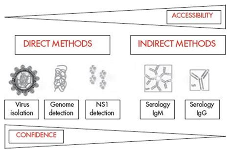 viral test laboratory diagnosis of dengue viral infection microbeonline