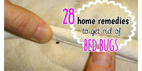 What Gets Rid Of Bed Bugs Home Remedies by 28 Effective Home Remedies To Get Rid Of Bed Bugs