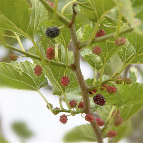 Arbre A Fruits by Arbre Boule Liste Ooreka