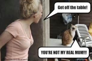 Sassy Cat Meme - sassy cat just for fun pinterest