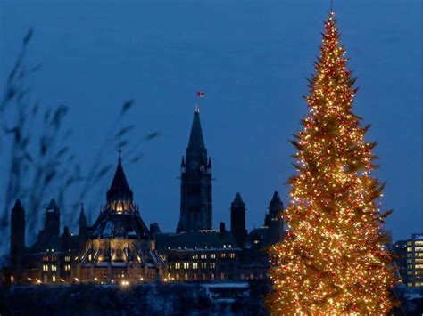 the biggest christmas trees in ottawa ranked ottawa citizen