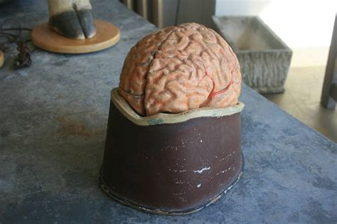 How To Make A Paper Mache Brain - how to make a paper mache brain 28 images brain