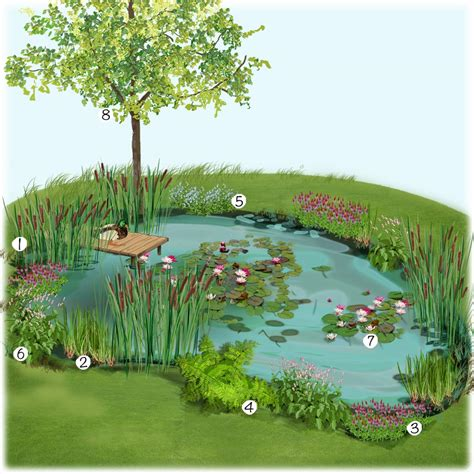 petit bassin jardin japonais amenagement bassin de jardin 14 amenagement bassin jardin japonais petit bassin aspect