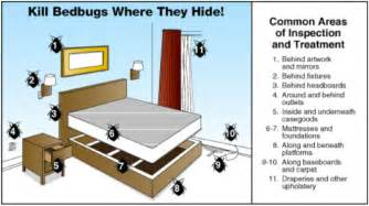 Heat Kills Bed Bugs Find A Bed Bugs Bed Bugs Dead Bugs