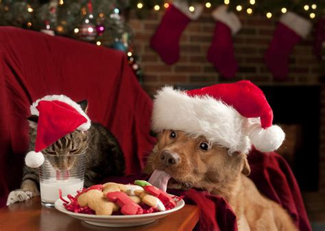 top pet gifts best gift for pets pet stuff guide