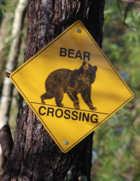 gander mountain asheville nc 101 best images about road signs on