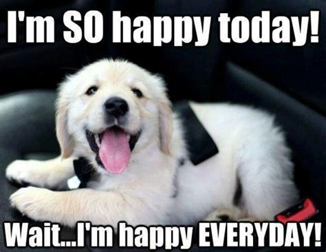 happy puppy meme 216 best animal memes images on animals animal and adorable