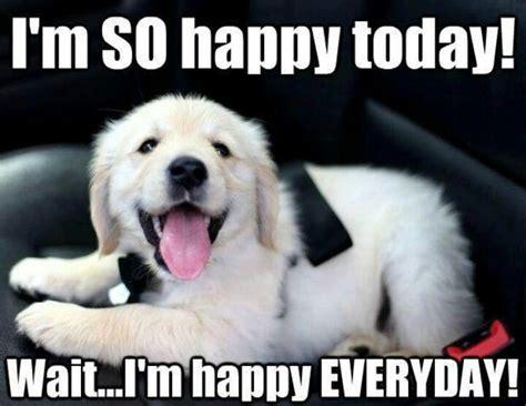 happy puppy 25 best ideas about happy puppy on cutest puppy australian shepherd