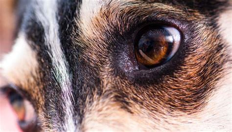 do dogs see in color do dogs see in color science says yes top tips