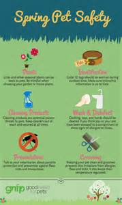 Spring Tips by Spring Pet Safety Tips Good News For Pets