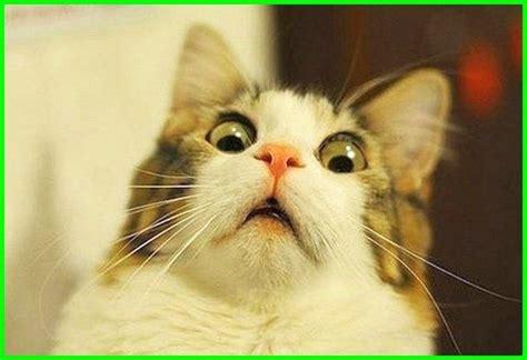 gambar kucing lucu imut   menggemaskan sedunia gambar kucing lucu kucing lucu