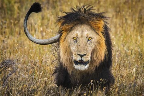 Safari Animal by Safari Animals 34 Photos That Will Make You Want
