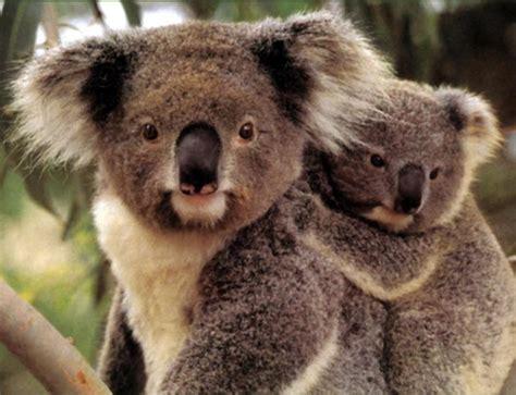 extinct breeds endangered species of animals endangered species pictures