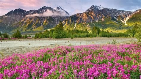 Flower Wallpaper Canada | mountains landscapes nature canada british columbia land