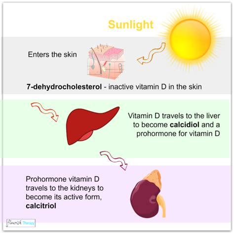 why we need uv light vitamin d deficiency sources of