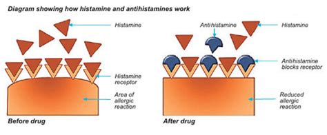 Detox Symtoms Or Histamine Response by Nut Allergies And Can Parents Actions Prevent Them