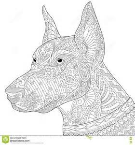 zentangle stylized doberman pinscher dog stock vector