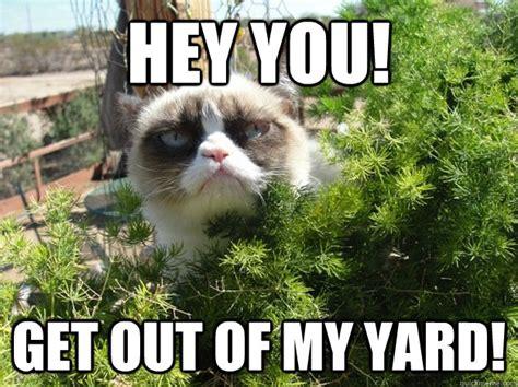 Tard The Cat Meme - tard the grumpy cat memes quickmeme