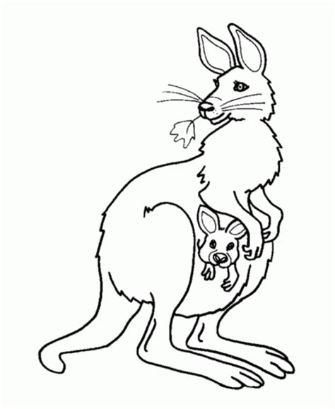 Kangaroo Coloring Pages Pdf | female kangaroo and baby coloring page coloring pages