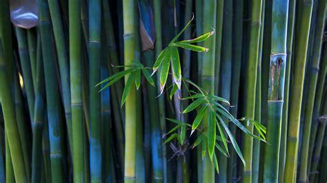 fabric wallpaper bamboo wallpaper
