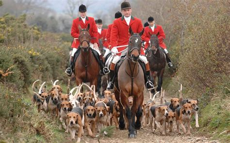 did anyone win celebrity hunted 2018 tories to legalise fox hunting if they win 2015 general