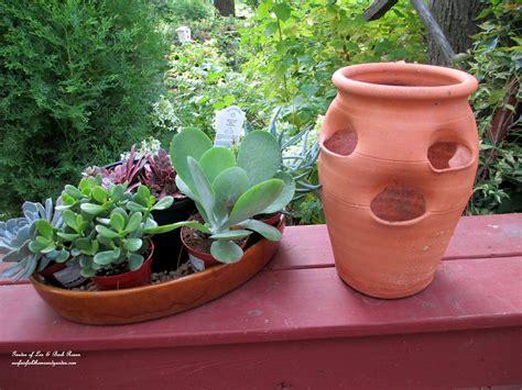 succulent pots for sale diy project succulent planter pot our fairfield home