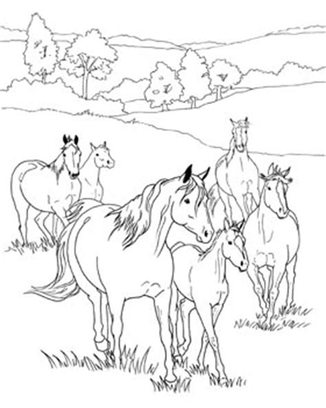 herd of horses coloring pages coloring pages